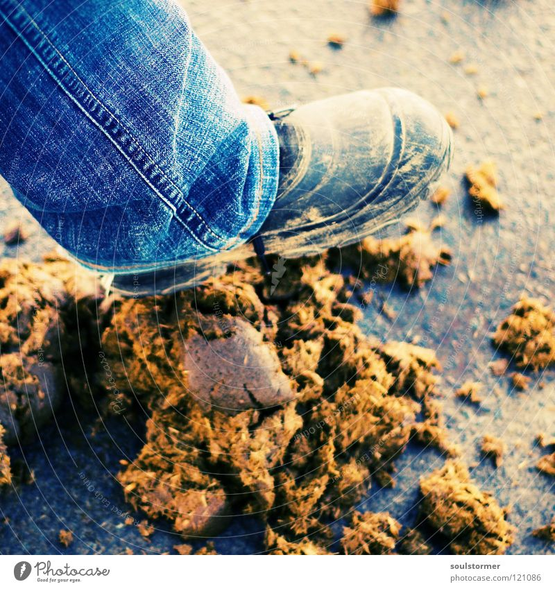 Animal Freedom Sadness Feet Footwear Legs Dirty Going Walking Jeans Anger Feces Traffic infrastructure Odor Disgust Aggravation