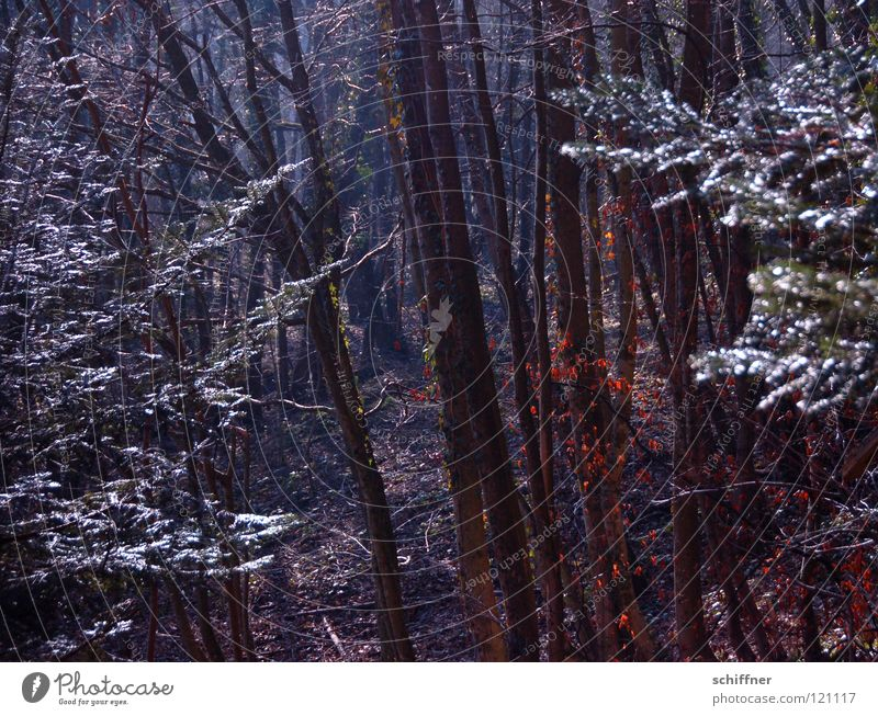 in the dark... Forest Winter Tree Wood Panic Undergrowth Slope Dark Leaf Leaf canopy Hiking Dark forest Tree trunk Forestry avalanche forest Fear