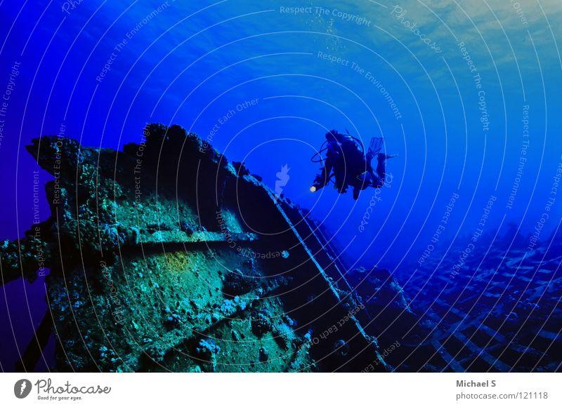 Ocean Vacation & Travel Africa Dive Aquatics Egypt Underwater photo Red Sea
