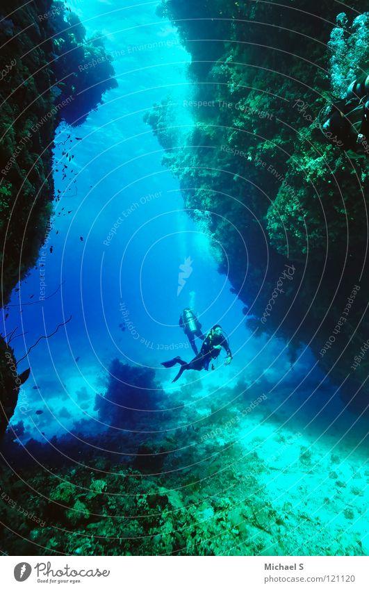 Water Ocean Vacation & Travel Underwater photo Dive Aquatics Egypt Red Sea Marine research