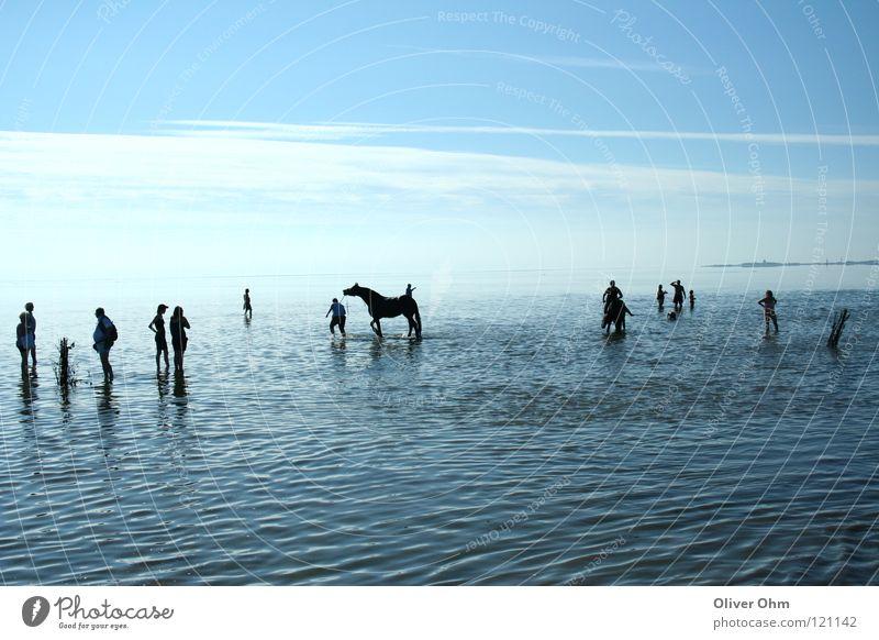Human being Beach Coast Hiking Horse North Sea Mud flats Cuxhaven