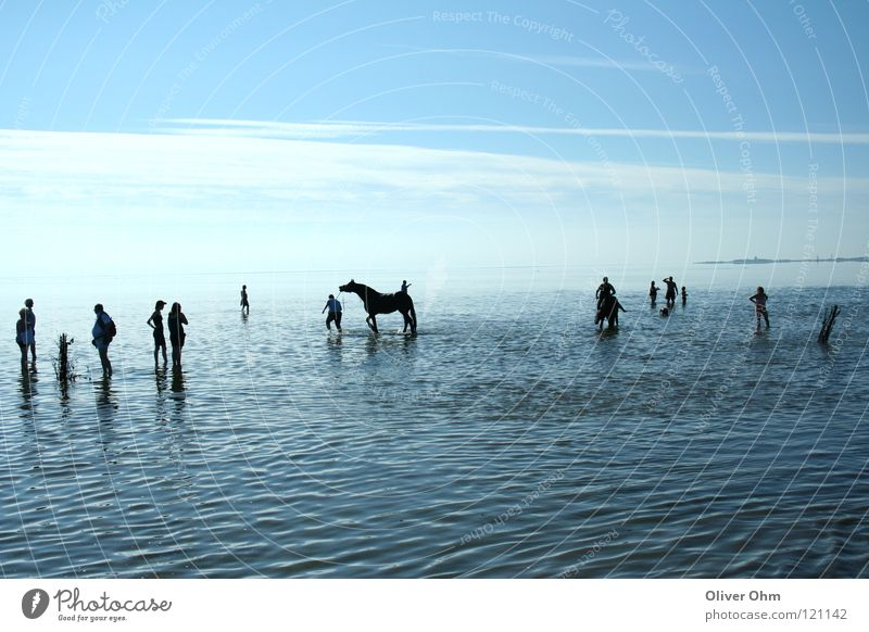 Watt Impression Mud flats Cuxhaven Horse Silhouette Hiking Coast Beach North Sea Human being