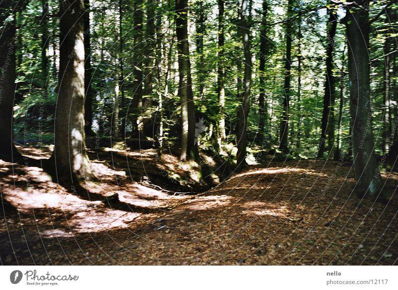 Sun Forest Autumn Mountain