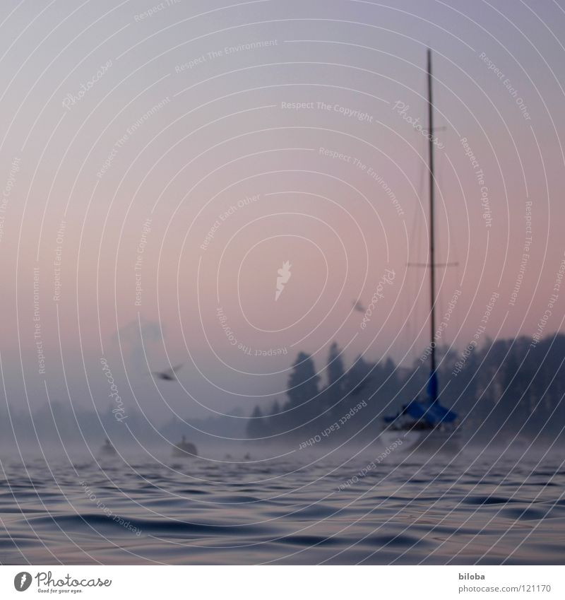 Boat IV Watercraft Expensive Weigh Waves Sailboat Liquid Cold Deep Lake Switzerland Forest Fog Moody Untouched Harmonious Winter Calm Glide Body of water