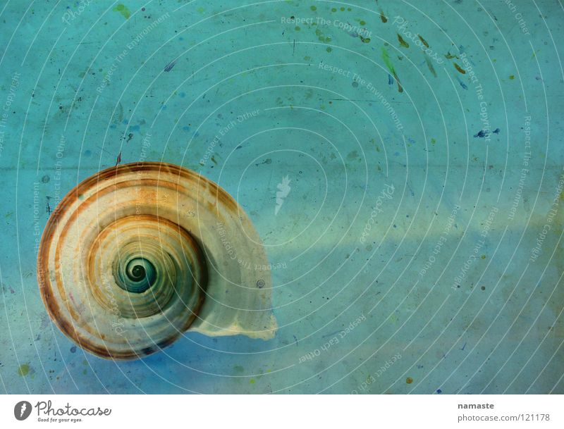 a second eternity Ocean Turquoise Time Tasty Art Seafood Beach Blue gradation Atelier Trust Concentrate Beautiful Old Marine animal studio floor current Life