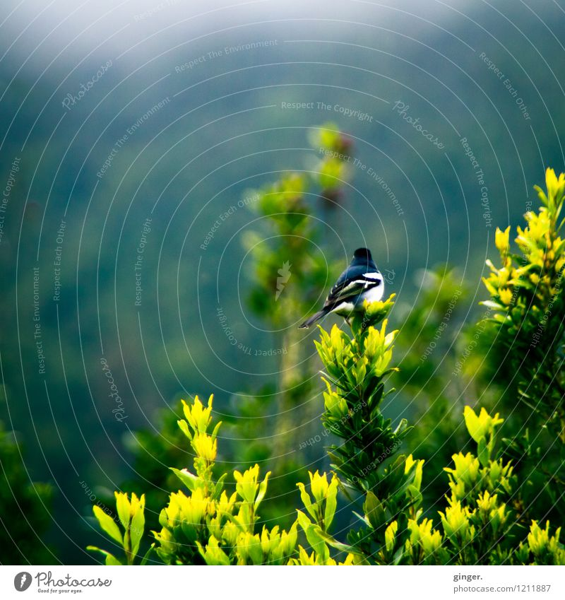 Nature Plant Green White Animal Black Yellow Spring Small Gray Bird Bushes Sit Plumed
