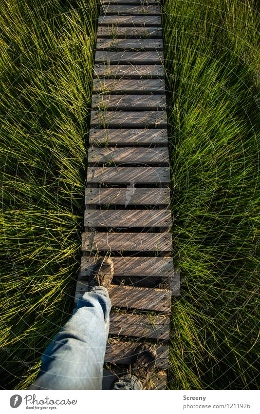 Step into the unknown Vacation & Travel Tourism Trip Hiking Human being Masculine Legs Feet 1 Nature Landscape Plant Spring Summer Grass High venn Bog Eifel