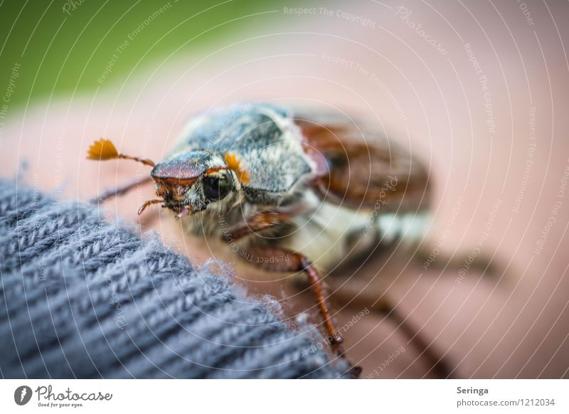 Nature Summer Animal Autumn Flying Wild animal Wing Cute Animal face Beetle Knitted May bug Wool sweater