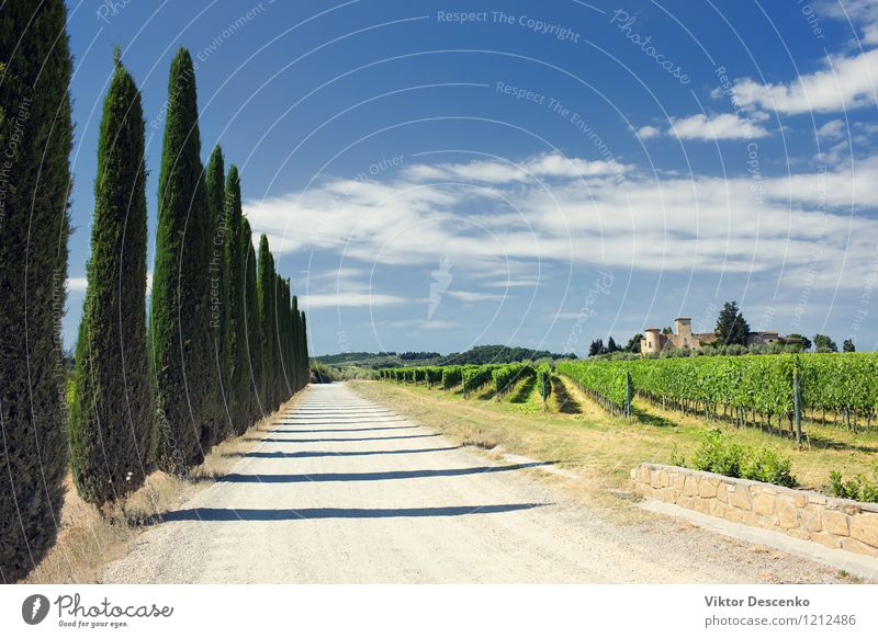 Typical Tuscany landscape with grape fields Vacation & Travel Summer House (Residential Structure) Nature Landscape Sky Grass Green Vineyard wine panoramic