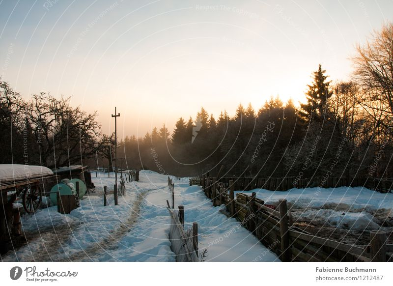 A new day is dawning Cloudless sky Sunrise Sunset Sunlight Winter Fog Snow Tree Wood Animal tracks Footprint Esthetic Idyll Nature Fence Hoar frost Colour photo