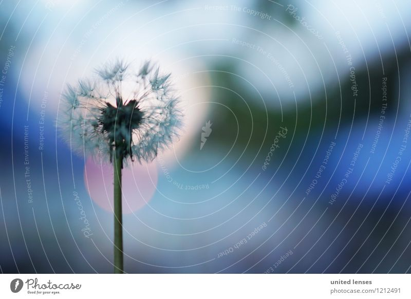 LO# Bokeh Art Esthetic Contentment Dandelion Flower Blossom Breath Blur Shallow depth of field Dreamily Meadow Flower meadow Colour photo Subdued colour