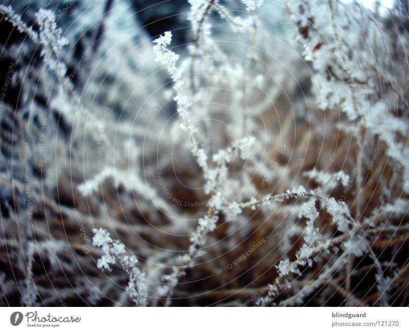 Tender Winter Snow crystal Ice crystal Thuja Green Cold Dark Macro (Extreme close-up) Tree Freeze to death Frozen Delicate Fragile Supercooled Fine White