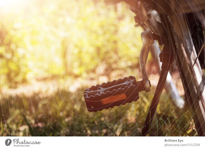 Parked bike in the sunshine Style Vacation & Travel Summer Sports Nature Meadow Warmth Emotions Moody Joie de vivre (Vitality) Optimism Passion Contentment