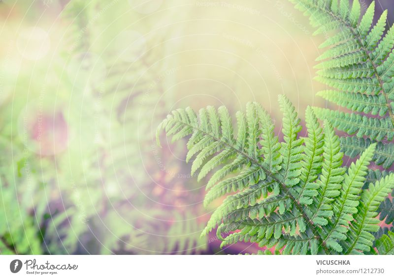 Nature Plant Green Summer Leaf Far-off places Forest Environment Yellow Spring Autumn Style Background picture Garden Lifestyle Park