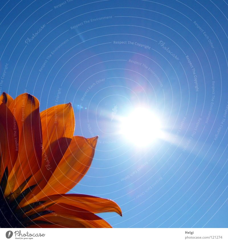 Beautiful Sky Sun Flower Green Blue Plant Vacation & Travel Yellow Relaxation Park Lighting Orange Point Long Blossoming