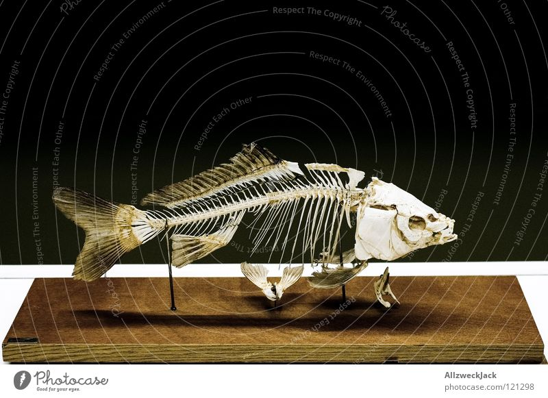 Old Death Together Signs and labeling Fish Education Museum Fishing (Angle) Barn Water wings Biology Exhibition Lessons Skeleton Fishery Placed