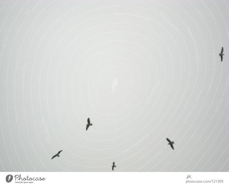 Sky Winter Gray Bird Flying Aviation Multiple Society Beautiful weather Dark gray