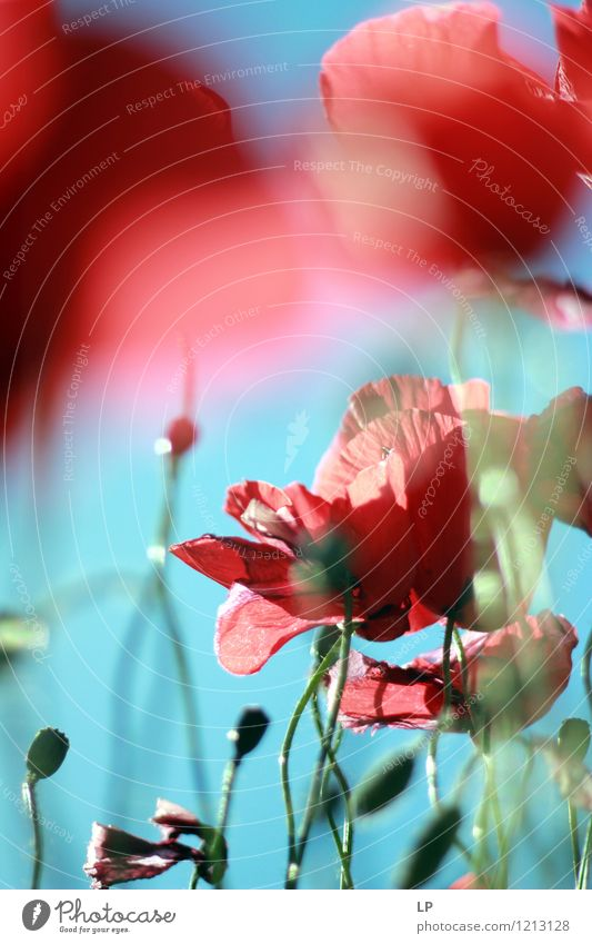 red blue Environment Nature Plant Elements Air Sky Cloudless sky Sunlight Spring Summer Climate Beautiful weather Flower Wild plant Blue Red Emotions Moody Joy