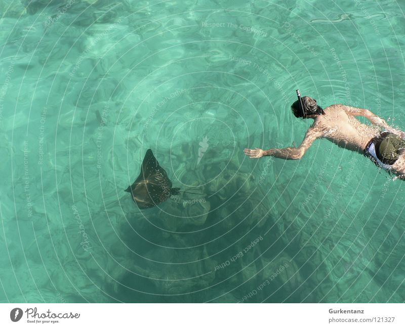 Ocean Peace Dive Hunting Aquatics Swimming trunks Underwater photo Ray Diving equipment Diving goggles Eagle ray