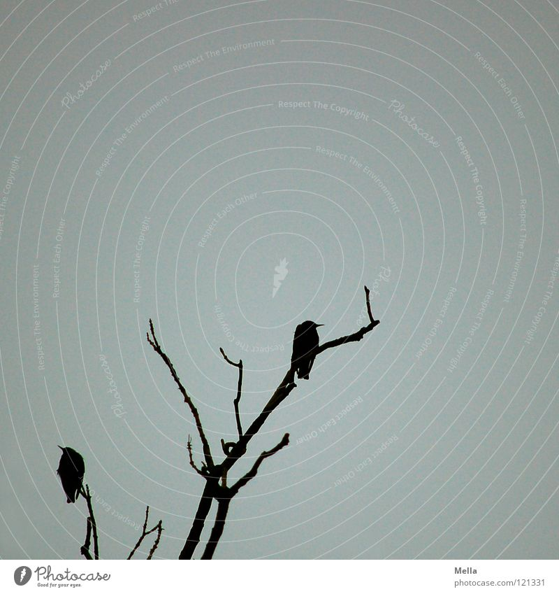 Tree Winter Black Dark Cold Above Death Gray Sadness Bird Wait Tall Sit Empty Grief Threat