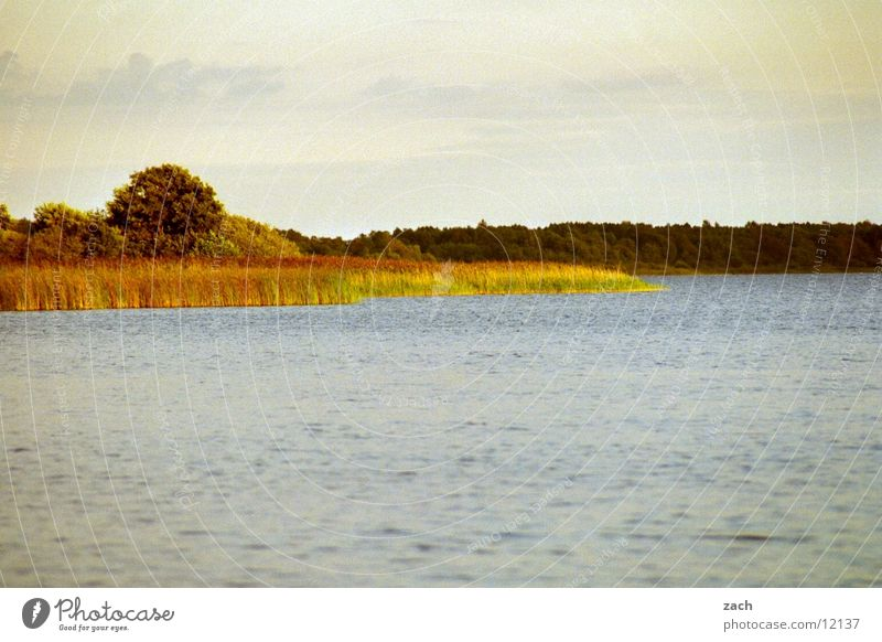 Abendsee Colour photo Exterior shot Deserted Copy Space top Copy Space bottom Morning Day Light Long shot Calm Nature Water Clouds Tree reed Coast Lakeside