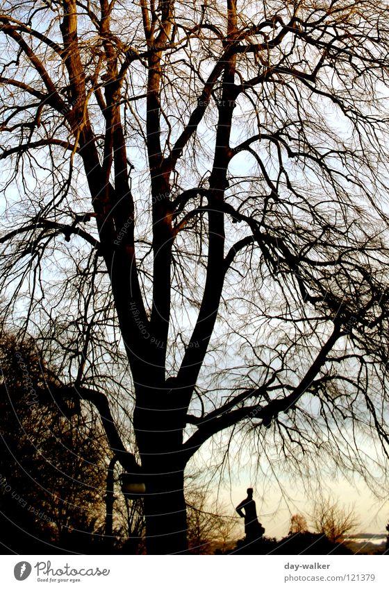 Human being Nature Tree Sun Winter Dark Autumn Bright Together Bench Branch Statue Tree trunk Dusk Branchage