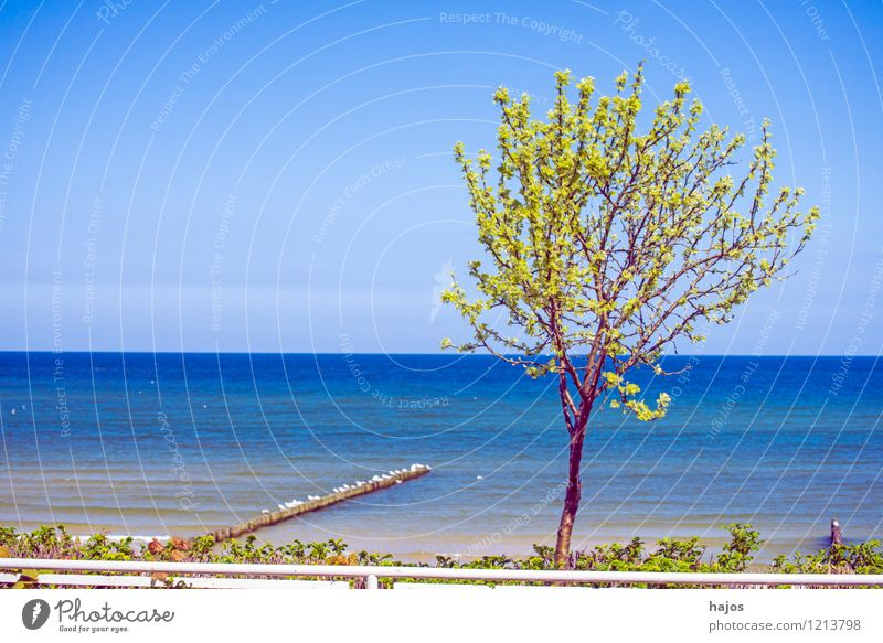 Tree at the Baltic Sea Vacation & Travel Far-off places Summer Summer vacation Beach Ocean Environment Nature Landscape Weather Coast Lake Blue Green Idyll