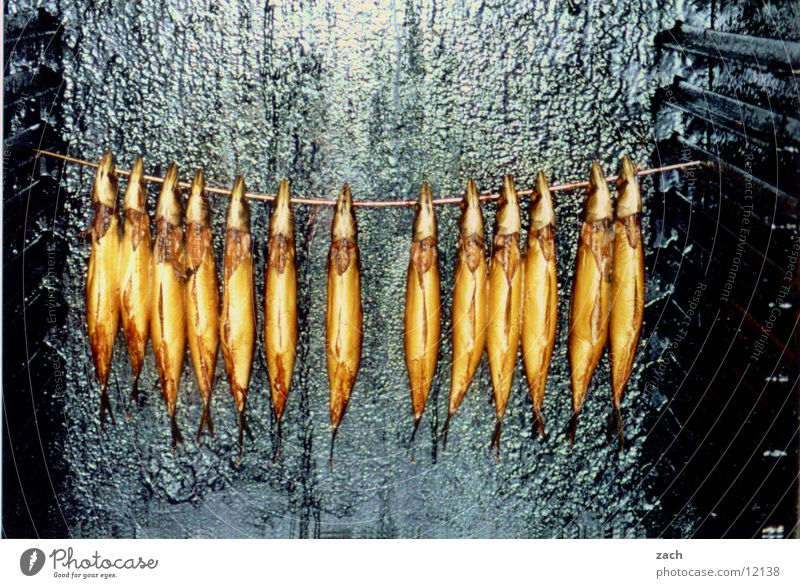 There may be fish Colour photo Exterior shot Deserted Copy Space top Copy Space bottom Food Fish Nutrition Animal Hang Delicious Death Appetite Equal Multiple