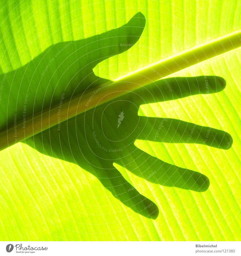 Nature Hand Green Beautiful Tree Summer Leaf Black Calm Yellow Style Arm Elegant Island Fingers Stripe
