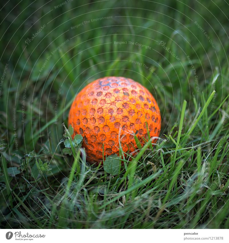 hole punching Leisure and hobbies Playing Park Joy Golf ball Athletic Grass surface Red Green Ball Colour photo Close-up Macro (Extreme close-up) Pattern