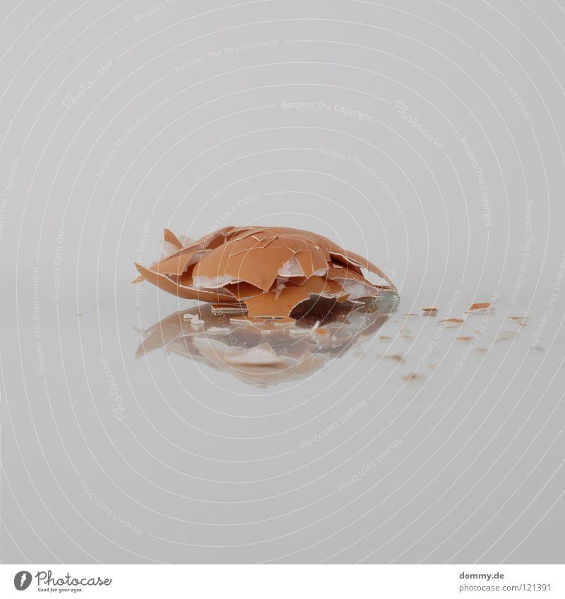 Nutrition Jump Brown Food Flying Empty Broken To fall Mirror Egg Crack & Rip & Tear Attempt Destruction Barn fowl Hollow Splinter