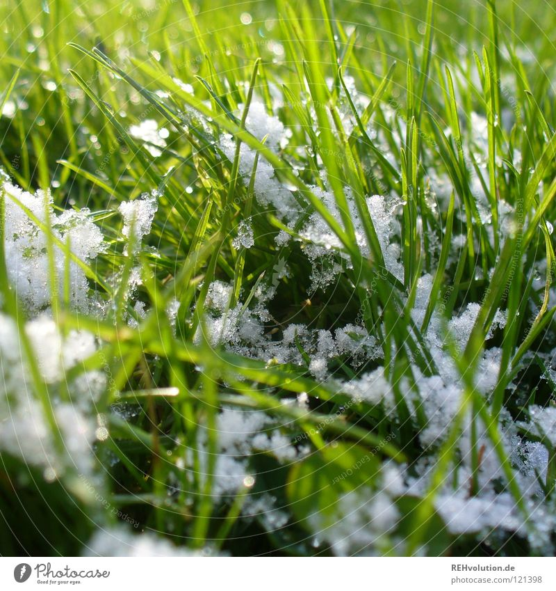 some snow ... Spring Green Grass Meadow Blade of grass Snowflake White Damp Wet Cold Winter Friendliness Lawn Bright Intersection