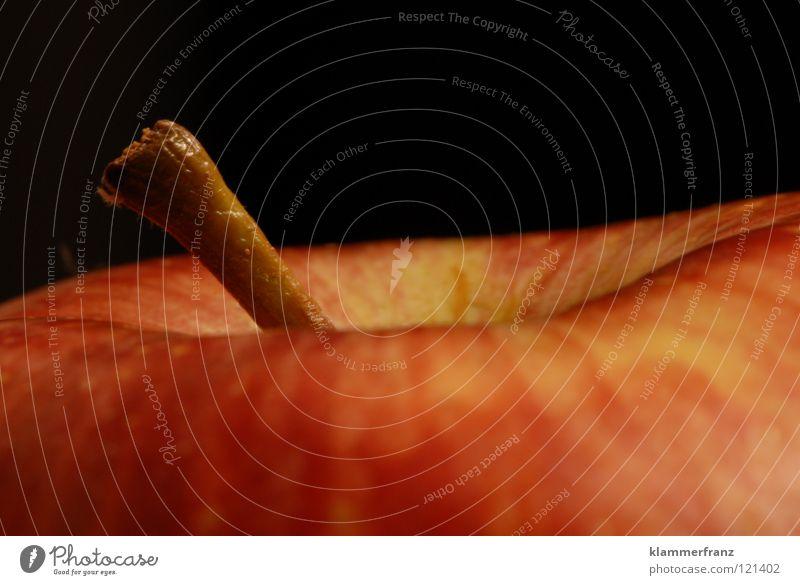 Nutrition Life Healthy Fruit Gastronomy Apple Stalk Vitamin