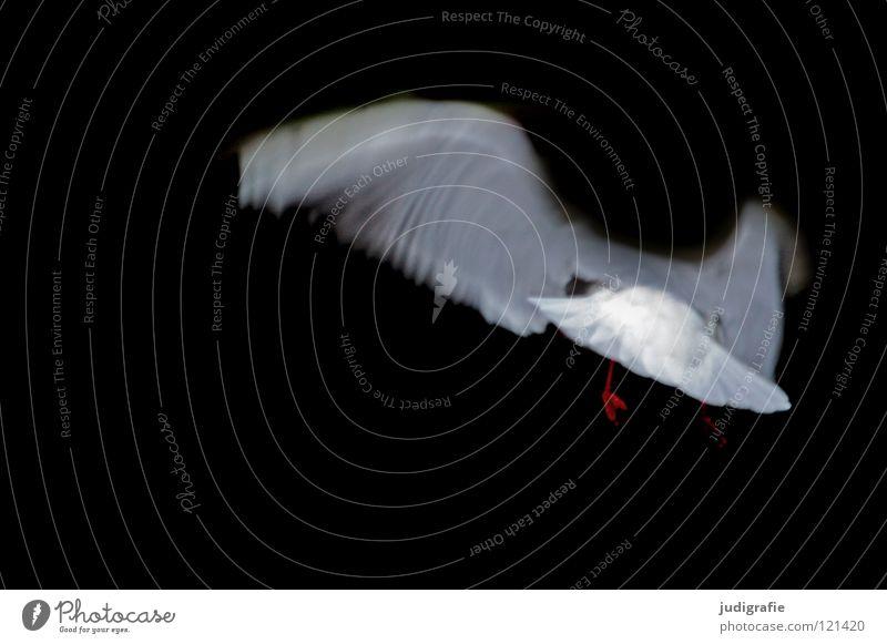 flight Seagull Black-headed gull  Bird Dark Animal White Colour Flying Wing Aviation Movement Dynamics Feather Nature seabird Elegant