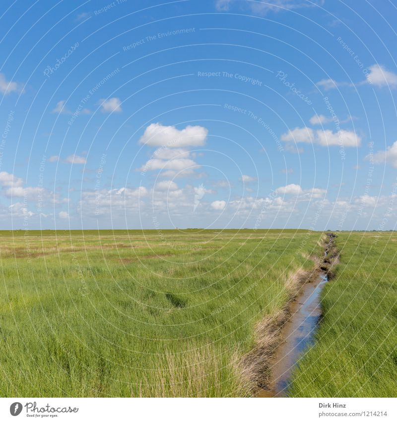 Westerhever / North Sea coast Environment Nature Landscape Plant Water Clouds Horizon Spring Summer Climate Beautiful weather Coast Bog Marsh Deserted Blue