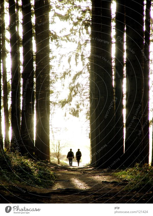 Human being Nature Tree Forest Dark To talk Lanes & trails Freedom Going Bright Couple 2 Together Open Walking Climate