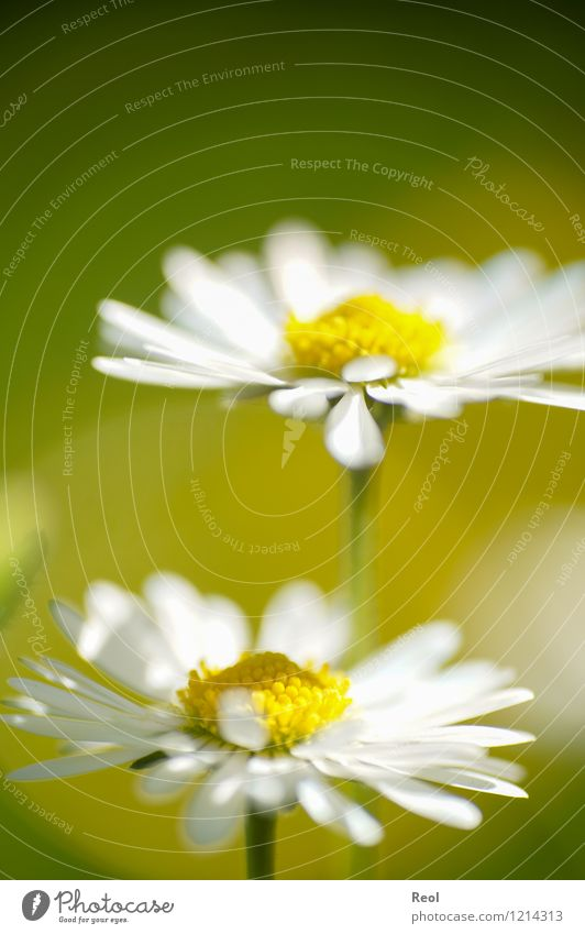 summer meadow Nature Plant Earth Spring Summer Beautiful weather Flower Foliage plant Lawn Daisy Garden Meadow Flower meadow Growth Yellow White