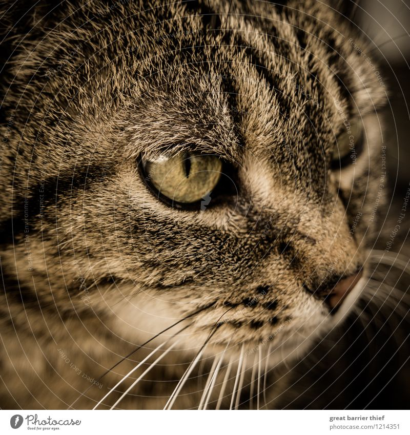 Who or what's that cat got in his eye? Animal Pet Cat Pelt 1 Observe Looking Brown Yellow Black Cat eyes Cat's head Watchfulness Beautiful Colour photo