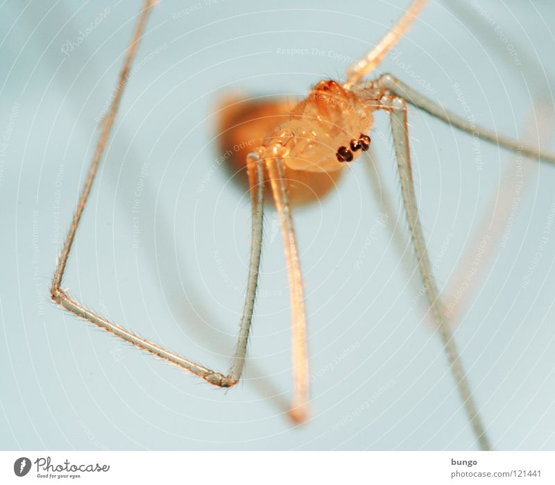 Eyes Small Fear Disgust Spider Panic Articulate animals Mandible Eating mechanism Chelicerae