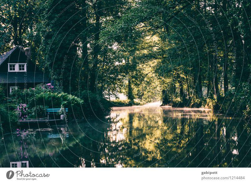Shire. Spreedorado. Environment Nature Landscape Water Summer Beautiful weather Tree Forest River bank Brook Spreewald Brandenburg Europe Juicy Green Life