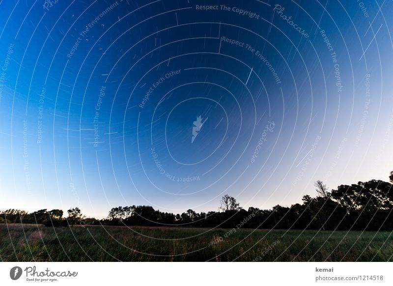 Spreedorado starlit. Environment Nature Landscape Plant Sky Cloudless sky Night sky Stars Summer Beautiful weather Tree Meadow Exceptional Large Infinity Blue