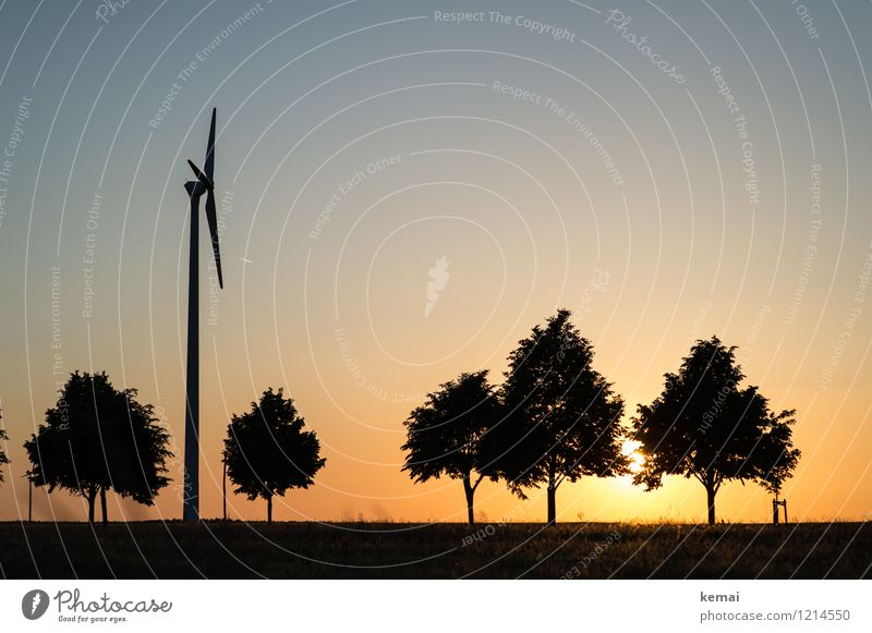Spreedorado | Tree species Technology Energy industry Renewable energy Wind energy plant Environment Nature Landscape Plant Sky Cloudless sky Sun Sunrise Sunset