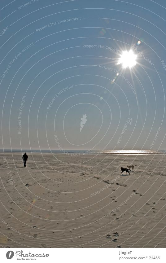 pseudo giant Beach Coast Ocean Lake Body of water Tide Waves Footprint Playing Clouds Dog Black Yellow Search To feed Labrador Loneliness Calm Thought Renewal