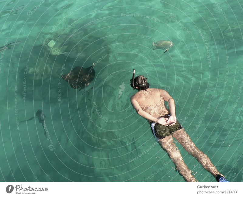 Ocean Animal Swimming & Bathing Observe Dive Hunting Float in the water Aquatics Diver Swimming trunks Snorkeling Ray Malaya Diving equipment Borneo Snorkeler