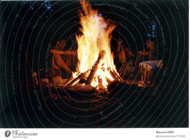 fiery Forest Blaze Evening