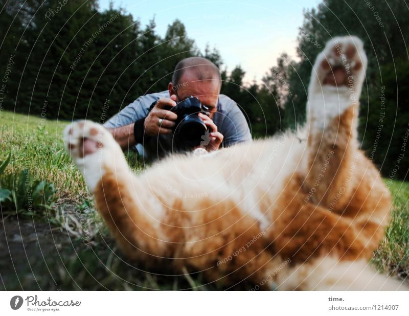 Cat Human being Relaxation Forest Life Movement Meadow Lie Masculine Communicate Observe Photography Cool (slang) Curiosity Passion Concentrate