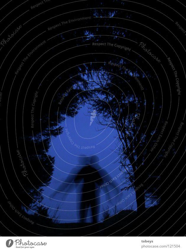 Human being Tree Forest Dark Street Grass Lanes & trails Dangerous Threat Posture Hill Hide Twig Fir tree Tunnel Escape