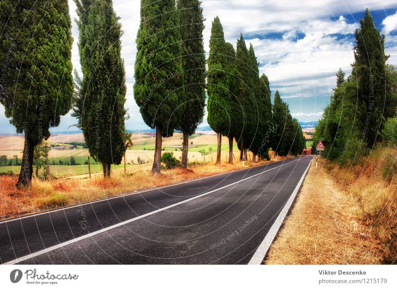 A typical landscape in Tuscany Environment Nature Landscape Plant Sky Tree Grass Meadow Yellow Gold Green Italy Vantage point Farm field Scene Rural scenery