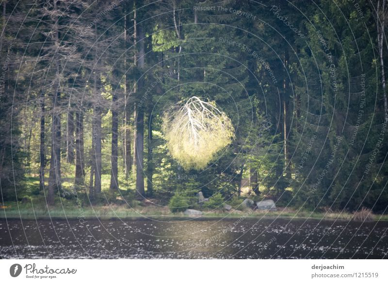 celestial sign Happy Well-being Trip Nature Elements Spring Beautiful weather Tree Lakeside Bavaria Germany Deserted Wood Observe Discover To enjoy Illuminate
