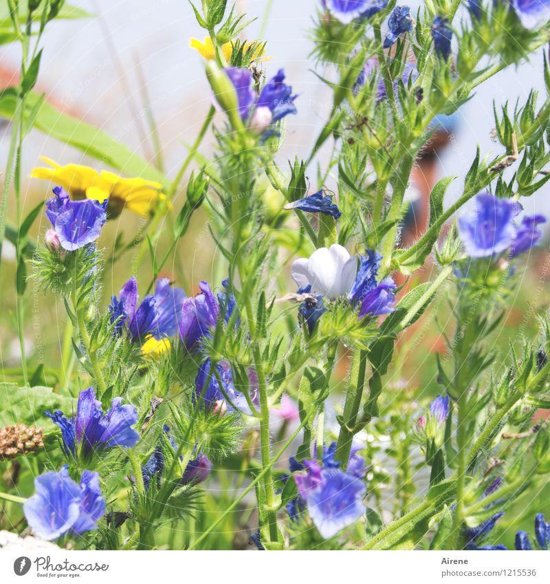 Floras Cornucopia I Plant Flower Meadow flower Blossoming Growth Friendliness Bright Natural Blue Yellow Green Surplus Bright green Light green Colour photo